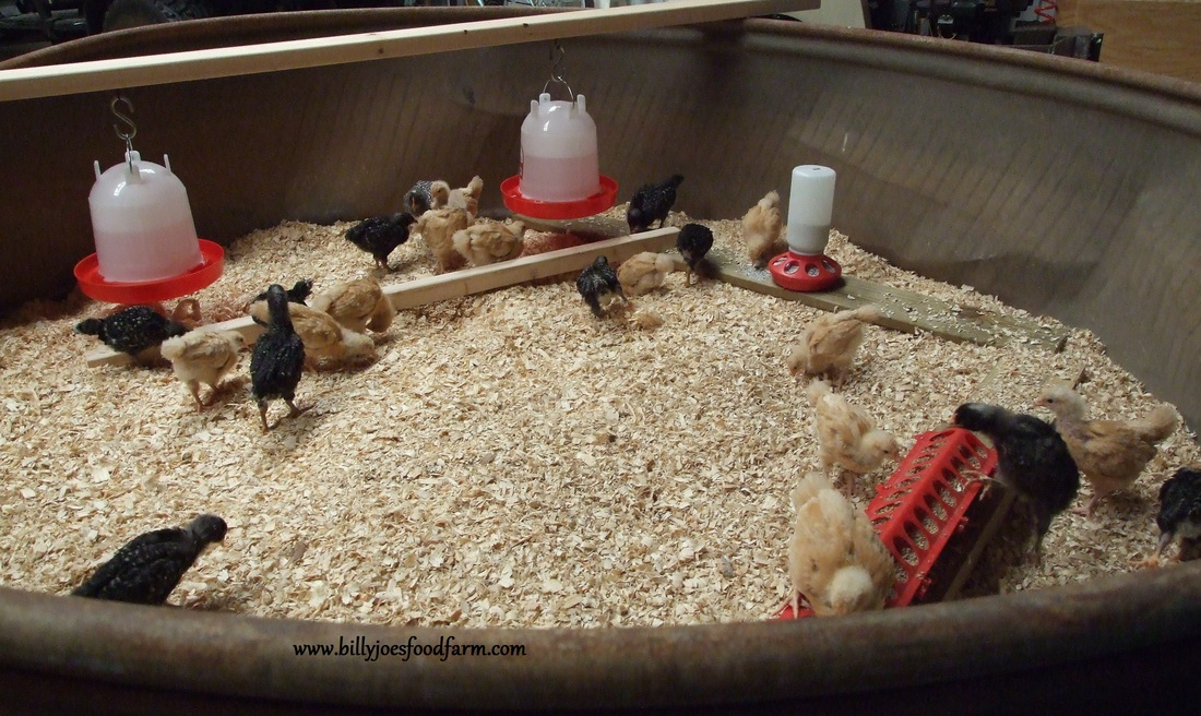 Cool Coops! ~ Solar Power Chicken Coop | Community Chickens